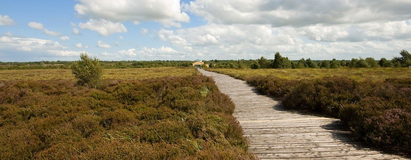 Corlea  Bog  Trackway -  Creative  Commons  Attribution 2.0  Generic   Kevin  King  Thumbnail0